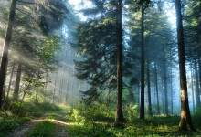 Закон о «лесной амнистии»: «Сколько вырубил — столько посадил».