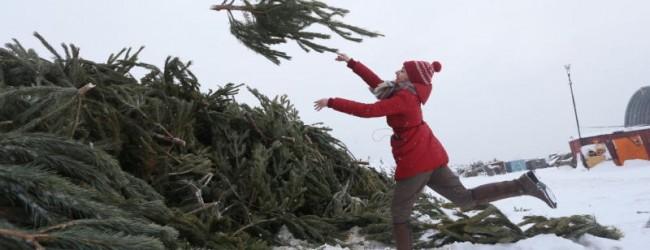 В России ширится проект «зеленый кругооборот»: с 9 января по 1 марта можно будет сдать елки на переработку.