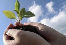 Благополучие Земли становятся предметом забот государства и общества.