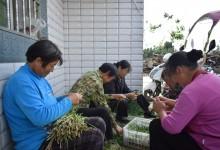 Китайцы тихо и обстоятельно осваивают сельский Дальний Восток.